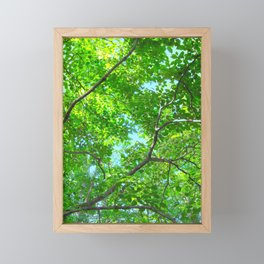 Canopy of Green, Leafy Branches with Blue Sky Framed Mini Art Print