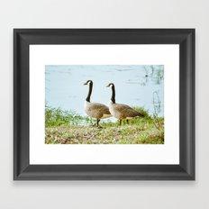 Gazing Geese Framed Art Print
