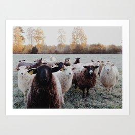 Sheep in Dalarna Art Print