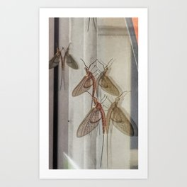 Reflections of the Mayfly Art Print