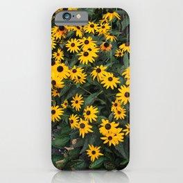Urban Black-eyed Susans iPhone Case