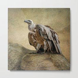 Griffon Vulture Metal Print