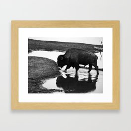 Reflect Like A Buffalo  Framed Art Print