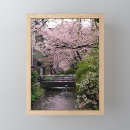 Sakura under the rain Framed Mini Art Print
