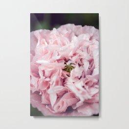 Pale Pink Peonie Metal Print