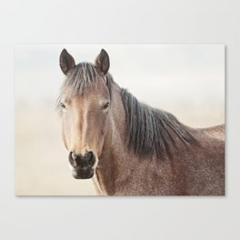 Horse Photograph, Soft Color Canvas Print