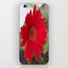 My Aunt's Flowers 2 iPhone & iPod Skin