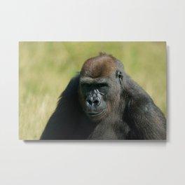 Gorilla Lope Watchful Eyes Metal Print