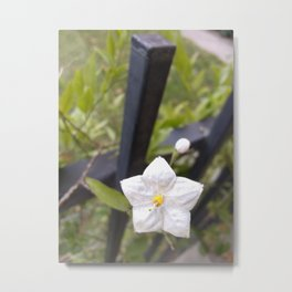 Tinyflower 1 (2018) from Roberta Winters Photography Metal Print