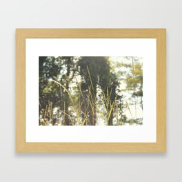 meadow. Framed Art Print