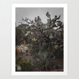Among the Thorns Art Print