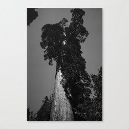 Sequoia National Park VIII Canvas Print
