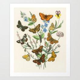 Butterflies and Flowers Vintage Illustration 1 Art Print