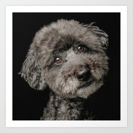 Black Poodle toy Dog, unconditional love of my Caniche Art Print