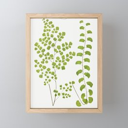 Adiantum Assimile and A Lunulatum from Ferns British and Exotic (1856-1860) by Edward Joseph Lowe Framed Mini Art Print