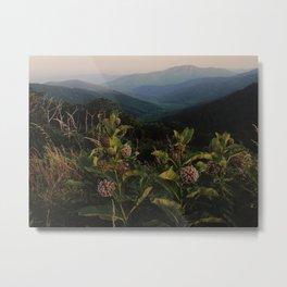 Milkweed in Shenandoah National Park Metal Print