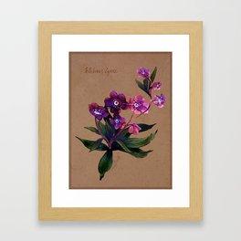 Helleborus lyrae Framed Art Print