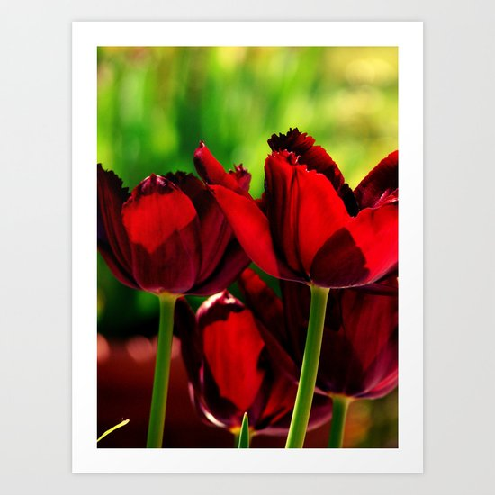 4 Ever Love -- Spring Botanical Ruby Red Tulips Art Print