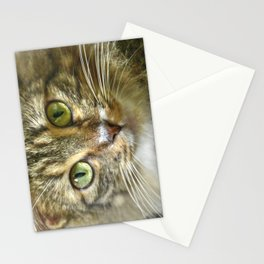 Mellow and Observant - Grey Fat Cat - Jose favorite Stationery Cards
