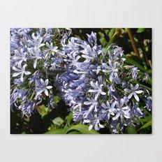 Love Flowers Canvas Print