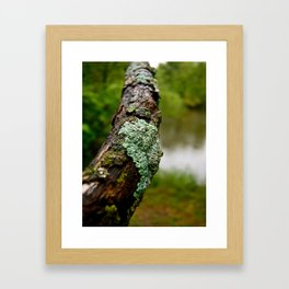 Dried Moss Framed Art Print