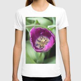 Longwood Gardens Orchid Extravaganza 30 T-shirt