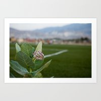 A flower grows on a football pitch Art Print