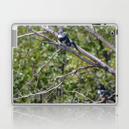 Two 4 One - Belted Kingfisher Laptop & iPad Skin