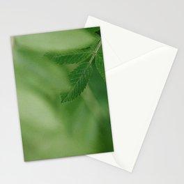 Spring life - Beautiful green rowan leaves in macro image Stationery Cards
