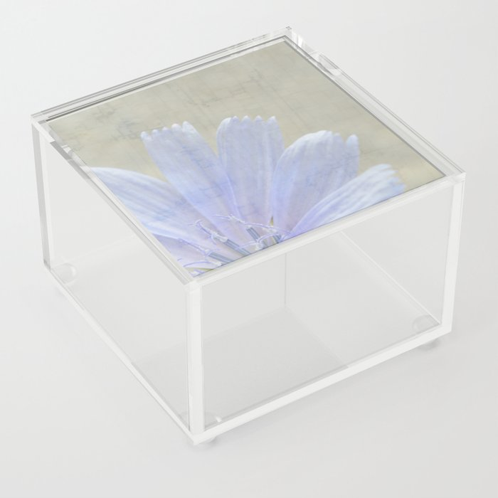 cichorium  Acrylic Box