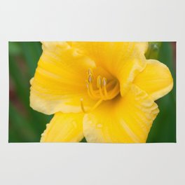 Yellow Daylily by Teresa Thompson Rug