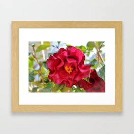 Red Wine Camellia Framed Art Print