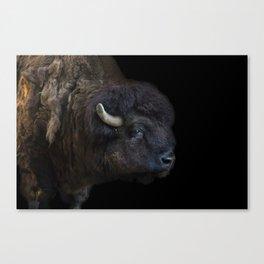Bison Photography | Wildlife Art | Animal Canvas Print