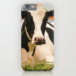 Holstein cow facing camera iPhone Case