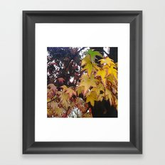 Fall Leaves California Framed Art Print