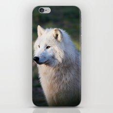 Canis Lupus Arctos II iPhone Skin