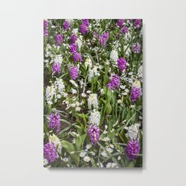Field of White and Purple Hyacinth Flowers and Daisies in Amsterdam, Netherlands Metal Print