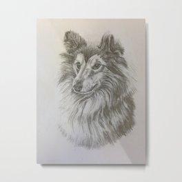 Shetland Dog Metal Print