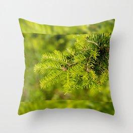 Green coniferous fresh shoots detail Throw Pillow