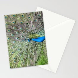 The peacock portrait Stationery Cards
