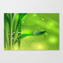 Bambus mit Wassertropfen Canvas Print