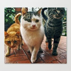Cats series 02 Canvas Print