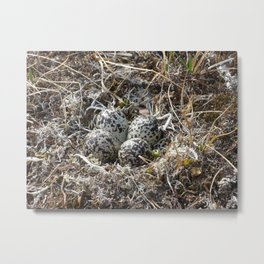 Bird Nest (Pacific Golden Plover) Metal Print