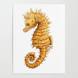 Sea horse, Horse of the seas, Seahorse beauty Poster