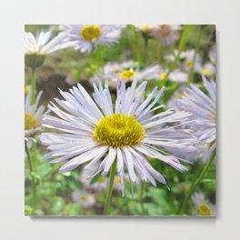 Watercolor Flower, Aster 02, Lost Creek Wilderness, Colorado Metal Print