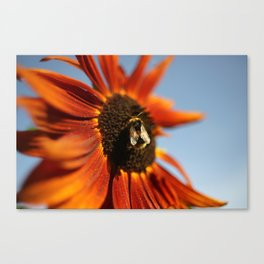 Busy Busy Bumblebee Canvas Print