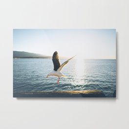 Sea Gull in the Sun Metal Print
