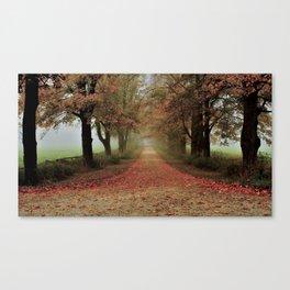 Deep tree pavement Canvas Print
