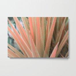 Pink aloe Metal Print