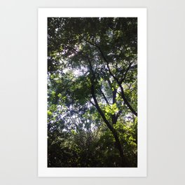 Nature Nurture (trees) Art Print